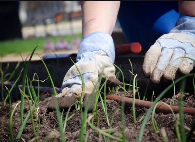 How To Get Your Dream Garden